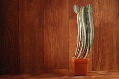 Cactus conservato in vaso su fondo di legno Saguaro naturale del saguaro del cactus Piante d'annata di natura morta su struttura  Fotografia Stock Libera da Diritti