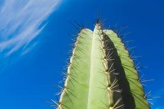 Cactus contra el cielo azul fotografía de archivo