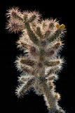 Cactus coperto di spine Fotografia Stock Libera da Diritti