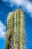 Cactus coperto di spine che cresce su Aruba Immagine Stock