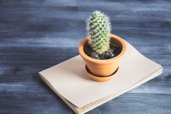 Cactus on copybook top. Top view of wooden table with cactus on top of copybook Stock Photo