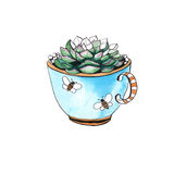 Cactus in a cup. . watercolor Royalty Free Stock Photography