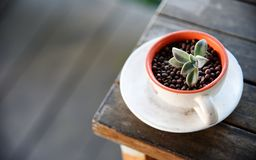 Cactus In cup On the wood stock photo