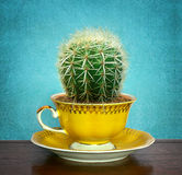 Cactus in cup Royalty Free Stock Image