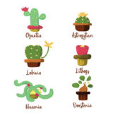 Cactus cupcake Royalty-vrije Stock Afbeeldingen