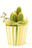 Cactus décoratif images stock