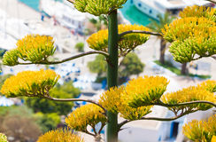 Cactus d'agave Photographie stock libre de droits