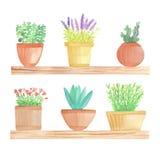 Cactus d'aquarelle dans des pots sur l'étagère Photos stock
