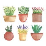 Cactus d'aquarelle dans des pots sur l'étagère Image stock