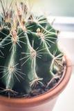 Cactus d'avanguardia sul davanzale della finestra, fine sul colpo Fotografie Stock Libere da Diritti