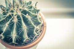 Cactus d'avanguardia sul davanzale della finestra, fine sul colpo Immagine Stock