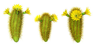 Cactus. 3d illustration  isolated on white background Royalty Free Stock Photo