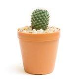 Cactus d'isolement Image libre de droits