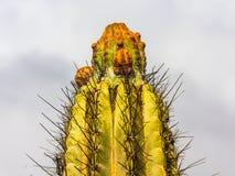 Cactus d'isolement sur le fond de nuages image libre de droits
