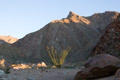Cactus d'Octotillo avec la montagne Image libre de droits