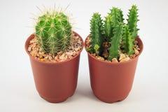 Cactus dans des bacs photo libre de droits