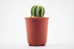 Cactus dans des bacs photographie stock