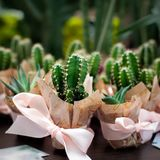 Cactus dans des pots Images stock