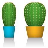 Cactus dans des pots colorés Différentes formes Fond blanc D'isolement Photo réaliste vecteur prêt d'image d'illustrations de tél Photo stock