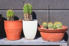 Cactus dans des pots de fleurs Photographie stock