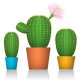 Cactus dans des pots Trois usines dans l'emballage coloré Fond blanc vecteur prêt d'image d'illustrations de téléchargement Images stock