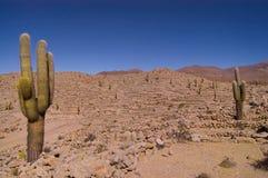 Cactus dans la citadelle enrichie de   Images stock