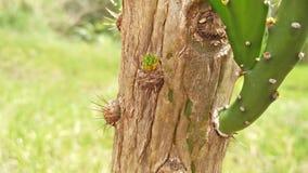 Cactus dans la ville d'Arapongas Images libres de droits