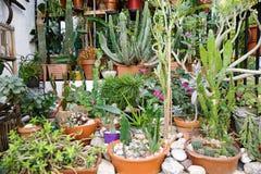 Cactus dans le bac brun Beaucoup de différents cactus photo libre de droits
