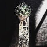 Cactus dans le cylindre en verre Image stock