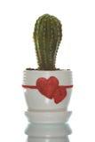 Cactus dans le flowerpot avec Image stock