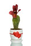 Cactus dans le flowerpot avec des formes de coeur Photographie stock libre de droits