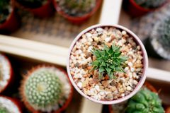 Cactus dans le jardin Photo stock