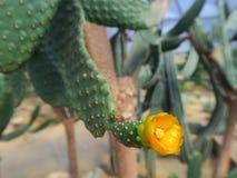 Cactus dans le jardin Images libres de droits