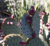 Cactus dans le jardin botanique de désert Photo libre de droits