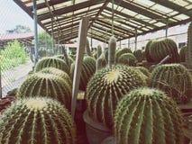 Cactus dans le jardin Maisons vertes Photos stock