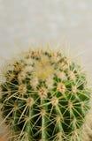 Cactus dans le jardin sur le mur blanc photographie stock