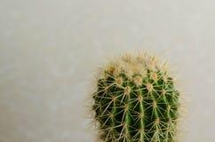 Cactus dans le jardin sur le mur blanc Photos stock