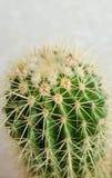 Cactus dans le jardin sur le mur blanc Image stock