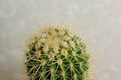 Cactus dans le jardin sur le mur blanc Images libres de droits