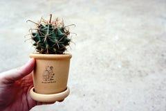 Cactus dans le pot Photographie stock libre de droits
