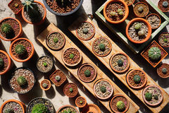 Cactus dans le pot Photo libre de droits