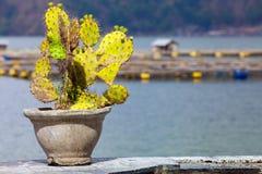 Cactus dans le pot au fond photos libres de droits