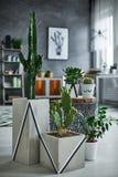 Cactus dans le pot décoratif moderne photo stock