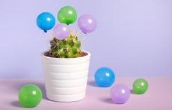 Cactus dans le pot et les petits baloons Images stock