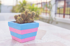 Cactus dans le pot sur la table de marbre style de couleur en pastel ou de vintage Images libres de droits