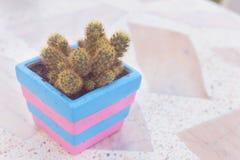 Cactus dans le pot sur la table de marbre style de couleur en pastel ou de vintage Images stock