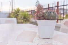Cactus dans le pot sur la table de marbre style de couleur en pastel ou de vintage Photos libres de droits