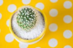 Cactus dans le pot sur la table jaune de point Photo libre de droits