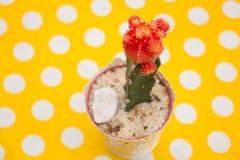 Cactus dans le pot sur la table jaune de point Photo stock