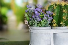 Cactus dans le pot sur la table dans le restaurant Photographie stock